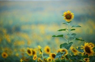 Trik Fotografi Bunga Agar Terlihat Lebih Indah dan Bagus